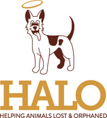HALO is Having a Trunk or Treat on October 31st from 1 - 4pm
